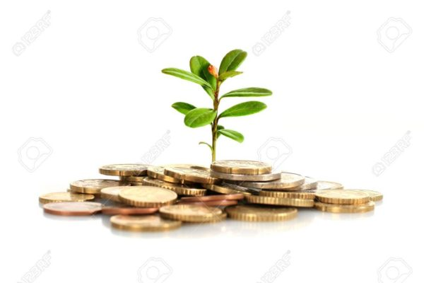 金運アップに即効性を求める人が買うべき『観葉植物ベスト5』